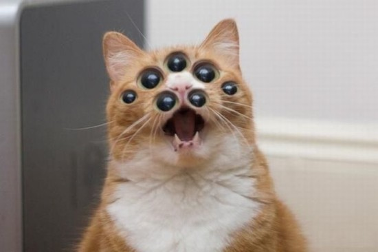 creepycat